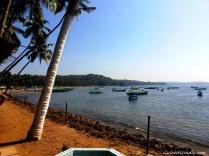 Dolphin Beach Scene Image